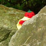 岩陰のトマトマンの写真