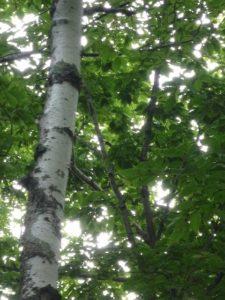 鳥がいた木