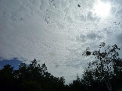 高積雲(たぶん)