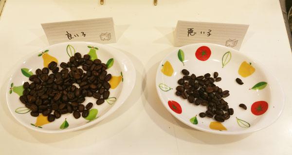 選別後のコーヒー豆