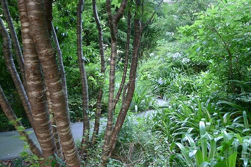ソニーの森 大きい木もある