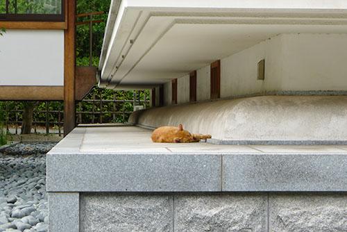 増上寺のにゃんこ