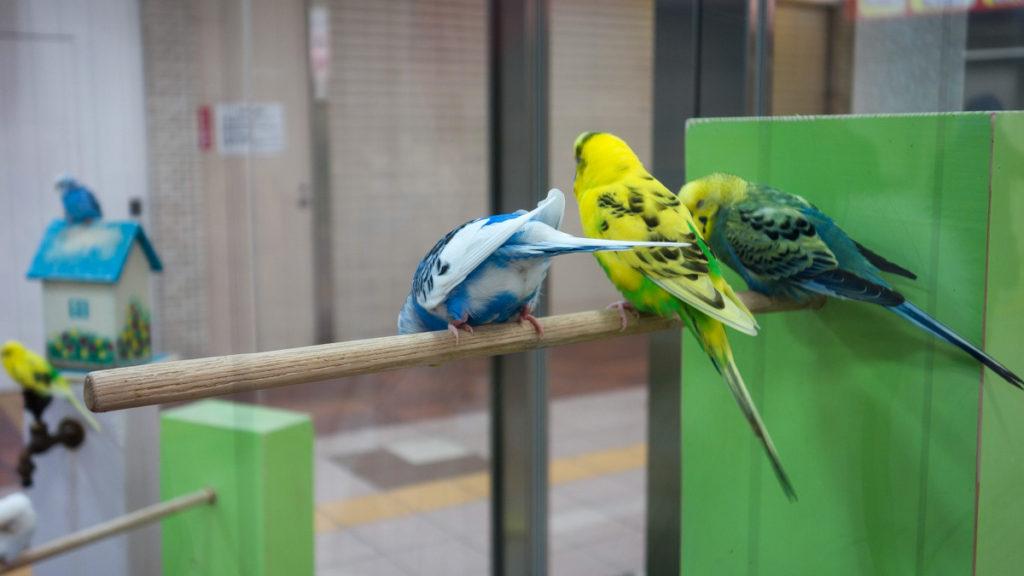 札幌地下道の小鳥
